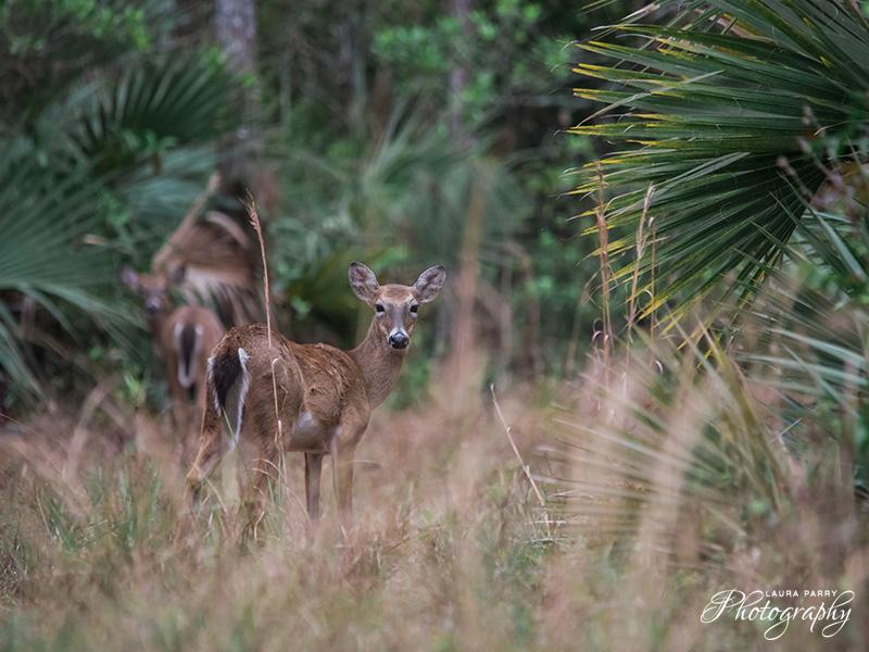 blog_grassywaters15